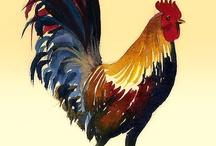 roosters acquerello