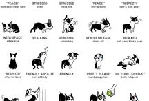 Know your dog. / Tips on understanding dog behavior.