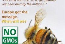 GMO&BEES