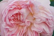 Güzel çiçekler