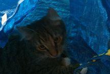 Ruffsan / Min katt
