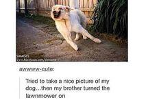 Doggos