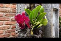 Orquídeas e plantas