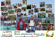 CM17040 Perth Animals and Marine Life