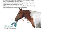Horses Tips, Tricks, n Secrets