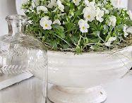 Blommor i krukor