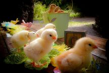 Here a chick~there a chick~everywhere a chick chick... / by * Touched by Time