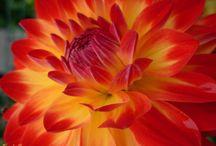 Garden / by Kara Curry