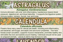 Herbal Remedies for Pets