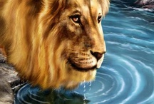 BEAUTIFUL LIONS / GOD'S  CREATION IS SO  MAGNIFICENT