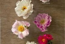 Flowers / by Maggie Calamari