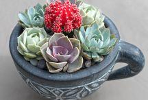 Plants | indoor and outdoor