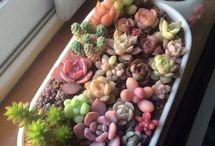 sukulent I kaktusy