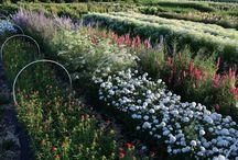 flower farm / urban flower farming / by Sarah Fought