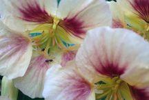 Einjährige Blumen for ever / Frisch aus der Samentüte. Oder Stars in Kübeln. Einjährige Sommerblumen zaubern ganz schnell hübsche Beete oder Blumenwiesen!