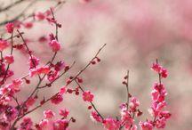 Nature#Trees#Flowers