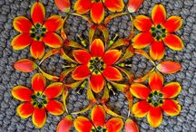 Art and Flowers / flowers in nature, flowers in art, flowers as art, creative expression