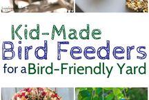 Bird feeders/Yard