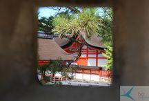Japonia - Kraj kwitnącej wiśni / Japonia - zwana Krajem Kwitnącej Wiśni lub Krajem Wschodzącego Słońca - to absolutnie fascynujące miejsce dla podróżników głodnych wrażeń. To najbardziej rozwinięte azjatyckie państwo, gdzie wspaniała natura idzie w parze z zaawansowanymi wynalazkami technologicznymi.  Samuraje, walki sumo, powabne gejsze, sushi, origami, ogrody japońskie, zielona herbata, sake to pojęcia wszystkim chyba znane. Różnorodność Japonii jest ogromna, a jej poznawanie to niekończąca się przygoda.