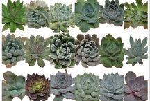 Succulent Reference