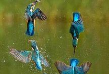Ptaki,Owady