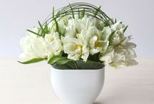 white pariate tulips