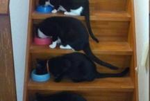 Kitties!!! :3