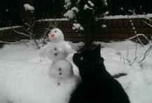 Our Cats <3
