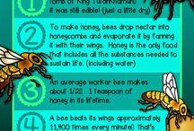 Ayla's bee SAE