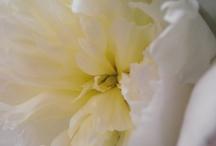 flowers / can't live without flowers je ne peux pas vivre sans fleurs ;)