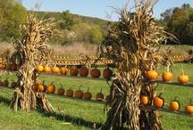 Fall, my very favorite... / by Sue Reynolds