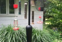 Backyard Bird Watching / Tips and tools for backyard bird watching including product reviews and plant guides.