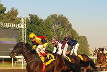 Horse Racing Tracks / AN OPPORTUNITY FOR THE HORSE RACING INDUSTRY TO APPLY MODERN TECHNOLOGY TO DIRT HORSE RACING TRACKS TO HELP ADVANCE THIS AMAZING SPORT TOWARDS A BRIGHTER FUTURE.