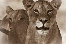 Wildlife / My wildlife photographs