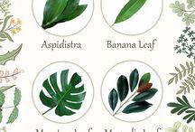 nume plante si flori