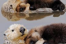 Otters / Who doesn't love an otter - they are so cute