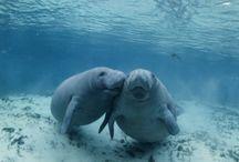 Podmořský život