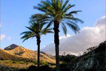 Beautiful So California Desert ~ My Home