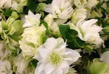 August flowers / Available at SF Brannan St Wholesale