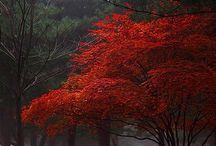 ~rosso~