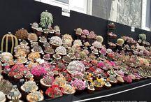 Indoor flower exhibition design