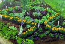 The Edible Garden / Fresh from the garden to the plate