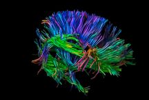 pathways and connections / science of brains and the art that comes from it