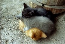 Animals / This is all about the cutest and funniest animals!!