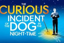The Curious Incident of the Dog in the Night-Time / A review of The Curious Incident of the Dog in the Night-Time, playing at the Gielgud Theatre.