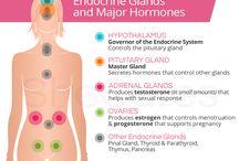 Understanding Hormones