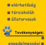 Kutyaiskola-6-honapos kortol