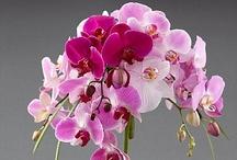 #Bouquet de fleurs