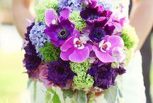 my purple world