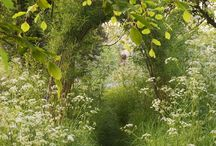 Paths into nature